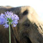 ANIMALI E SALUTE PSICO-FISICA: LA PSICOLOGIA TRANS SPECIE