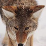 UOMO E ANIMALI SELVATICI: CONOSCERE, RISPETTARE E CONVIVERE