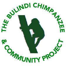 www.bulindichimpanzees.weebly.com