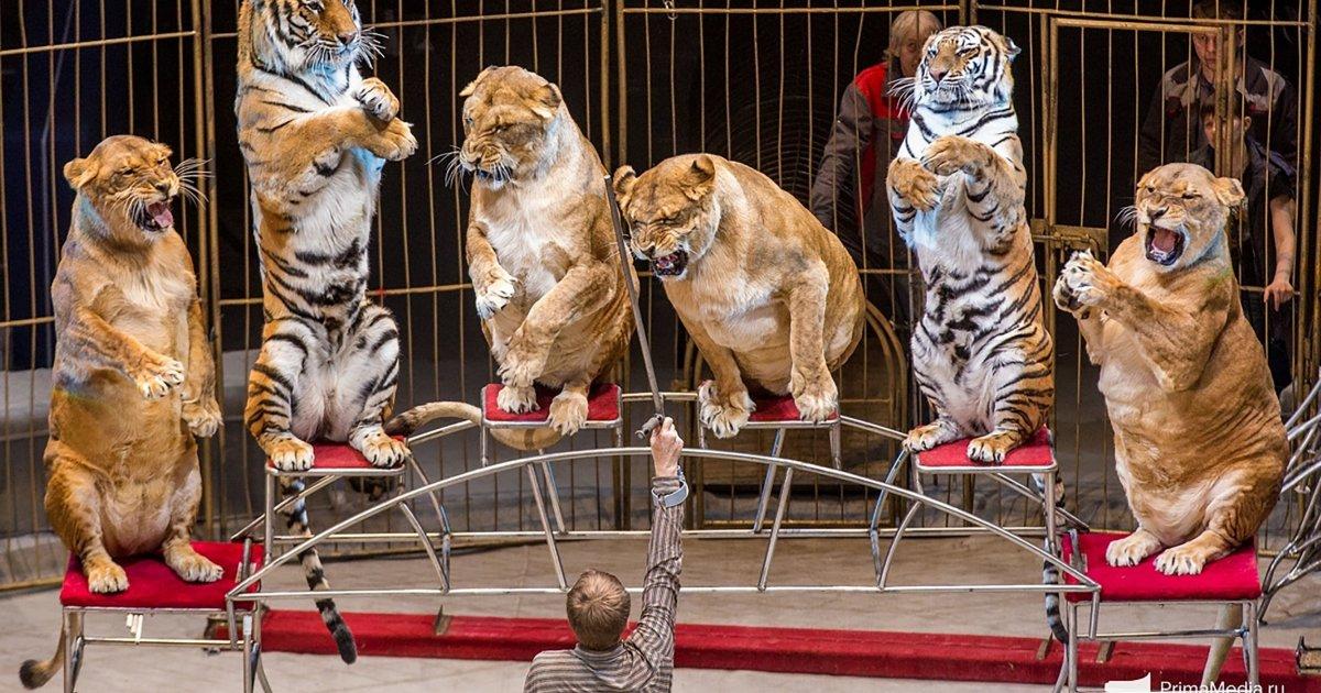 training animale