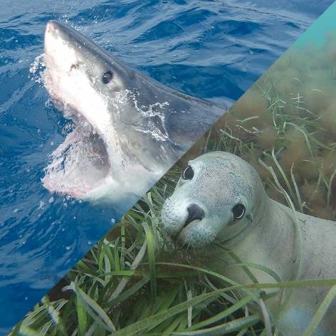 nuotare foche