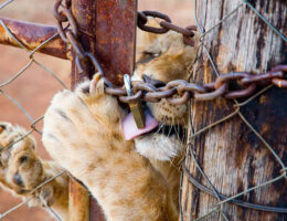 stop canned hunting