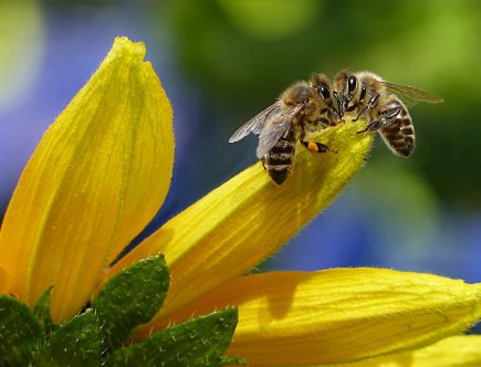 bee sipping nectar on flower during daytime